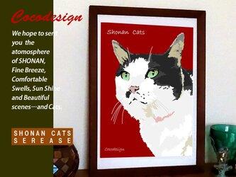 湘南Cats ポートレイト7 うす色ぶち猫の画像