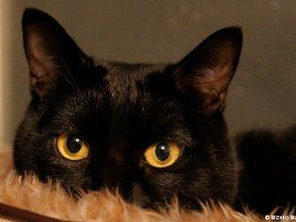 ポストカード 黒猫ヴィヴィ① 5枚セットの画像