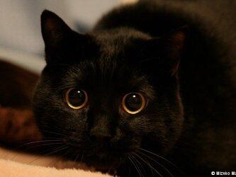 ポストカード 黒猫ヴィヴィ② 5枚セットの画像