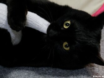 ポストカード 黒猫ヴィヴィ③ 5枚セットの画像