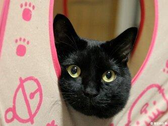 ポストカード 黒猫ヴィヴィ④ 5枚セットの画像