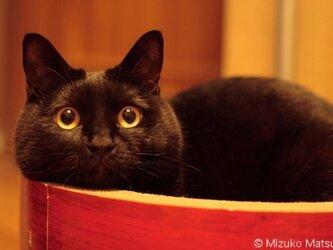 ポストカード 黒猫ヴィヴィ⑤ 5枚セットの画像