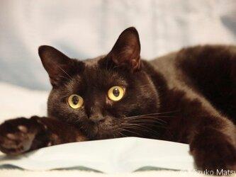 ポストカード 黒猫ヴィヴィ⑥ 5枚セットの画像
