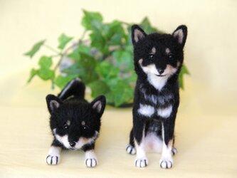 S様オーダー 【黒柴犬】 ナイト君と小春ちゃん ご予約品 の画像