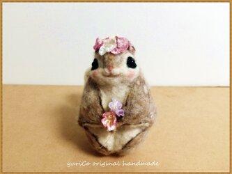癒しの妖精✿momoちゃん お花バージョンの画像