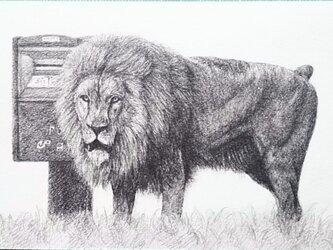 草原のライオンの画像