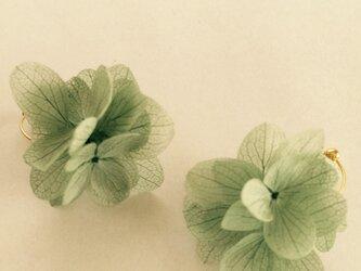 プリザアジサイのイヤリング  緑の画像