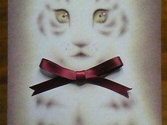 赤いリボンの赤ちゃんトラのポストカードの画像