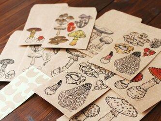 ●キノコ図鑑シリーズ●キノコと毒キノコのポチ袋の画像