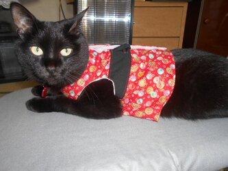 猫の着物風ベスト(リード可)の画像