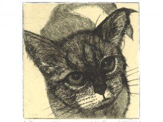 猫の銅版画『明日こそ』の画像