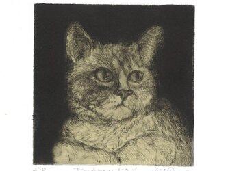 猫の銅版画『明日も』の画像