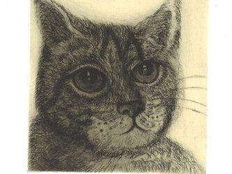 猫の銅版画『明日』の画像
