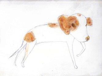 dogの画像