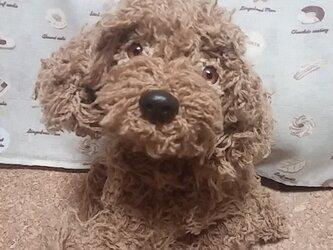 あみぐるみ(アプリコットプードル犬)の画像