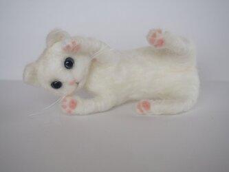 やんちゃな白猫ちゃんの画像
