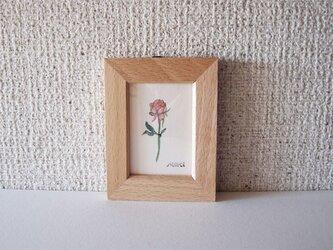 小さなインテリア バラ ピンクの画像