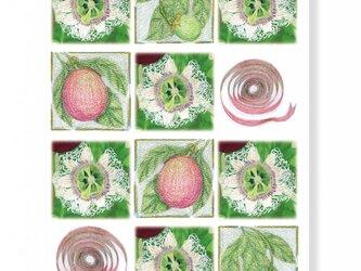 クリスマスカード 白い時計草のクリスマスの画像
