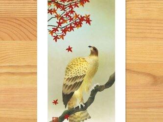 ポストカードF-【秋とび色】2枚セットの画像