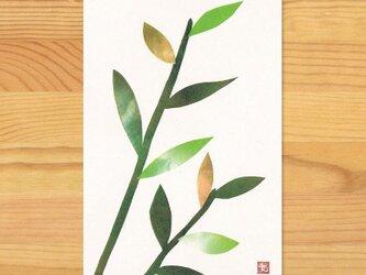 ポストカードL-【葉っぱ】2枚セットの画像