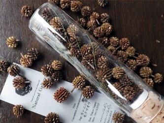 """Seed mania bottle """"Casuarina""""の画像"""