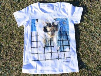 ぼけた猫写真のTシャツの画像