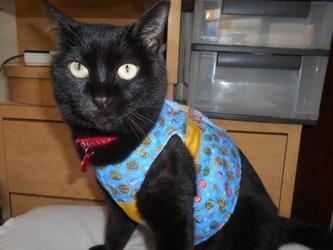 猫の着物風ベスト(リード可) の画像