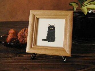 猫 「クロちゃん」の画像