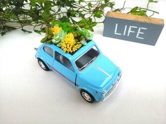 家族で楽しめるフェイク多肉植物!人気NO.1!ヨーロッパ代表FIATの画像