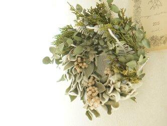 ユーカリ ラムズイヤー wreathの画像