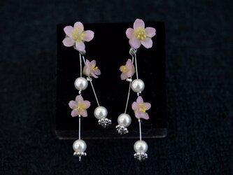 枝垂れ桜のピアス or イヤリングの画像