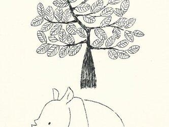 ポストカードセット-サイと大きな木の画像