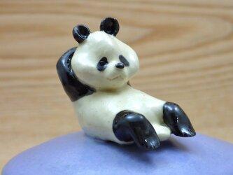 筋トレ!筋トレ!ムキムキ?パンダ-Aの画像