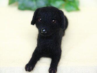I様オーダー 【黒ラブラドールレトリバー犬】 ebonyちゃん ご予約品 の画像