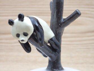 脱力!脱力!雪国パンダ-Eの画像