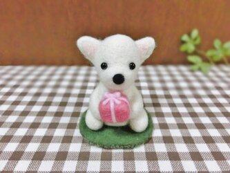 チワちゃんのプレゼント☆の画像