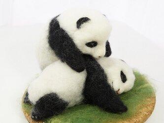 twin pandasの画像