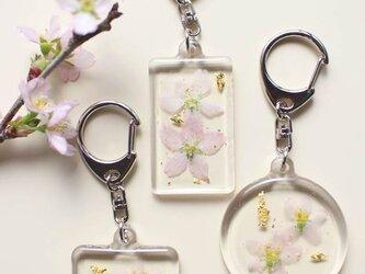 日本の花はやっぱり桜!啓翁桜の押し花キーホルダー (丸)の画像