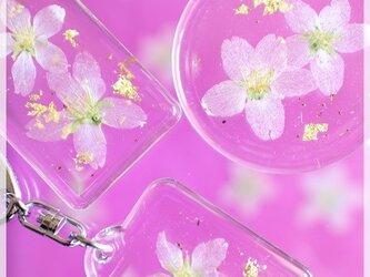 日本の花はやっぱり桜!啓翁桜の押し花キーホルダー (正方形)の画像