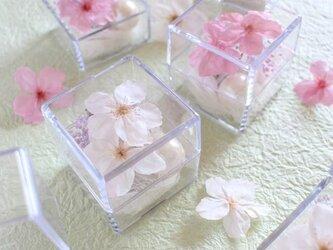 桜のプリザーブドフラワー「ミニキューブ・さくら(さくら色)」の画像