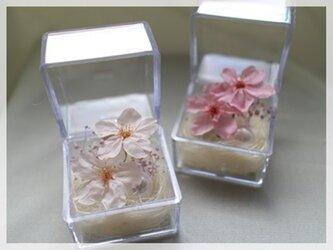 桜のプリザーブドフラワー「ミニキューブ・さくら(ピンク色)」の画像
