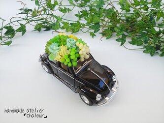 家族を魅了するフェイク多肉植物!ワーゲンビートルブラックの画像