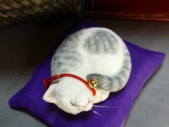 アンモニャイト サバ白猫の画像