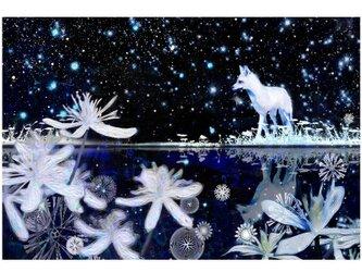 雪狐 A4サイズ の画像