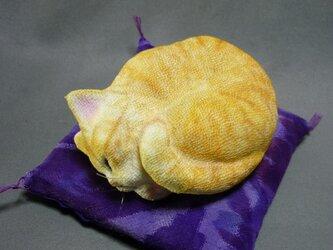 アンモニャイト 茶トラ猫さんの画像