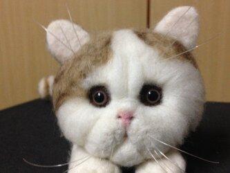羊毛フェルト○猫(=^ェ^=)○の画像