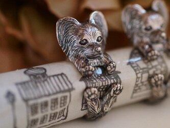 犬リング パピヨンの画像