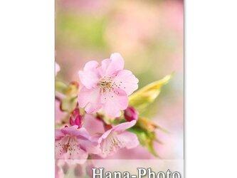 1040)「桜・・・5種類のさ・く・ら」  5枚組ポストカードの画像