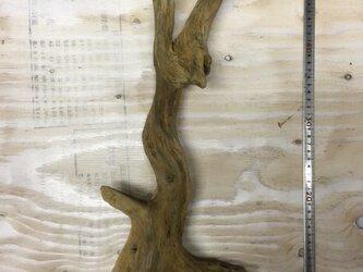 流木素材・インテリアの画像