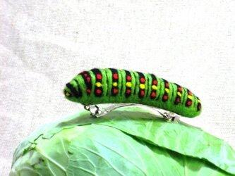 キアゲハの幼虫バレッタの画像